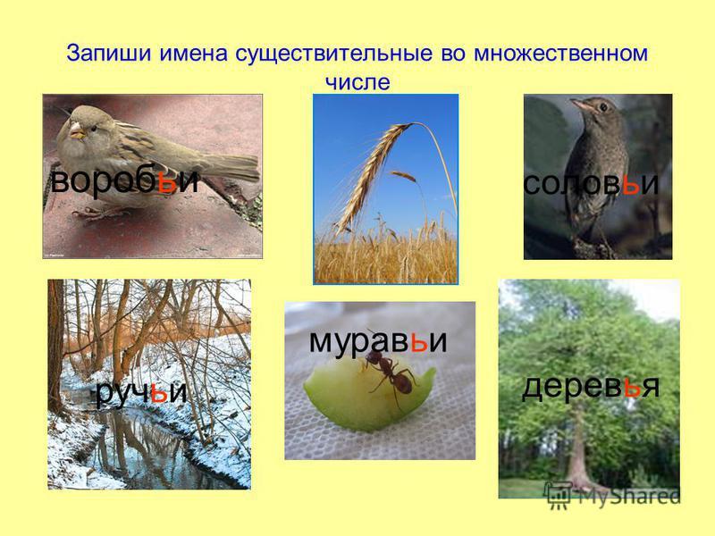 Запиши имена существительные во множественном числе воробьи колосья соловьи ручьи муравьи деревья