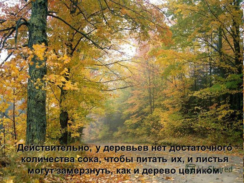 Действительно, у деревьев нет достаточного количества сока, чтобы питать их, и листья количества сока, чтобы питать их, и листья могут замерзнуть, как и дерево целиком.
