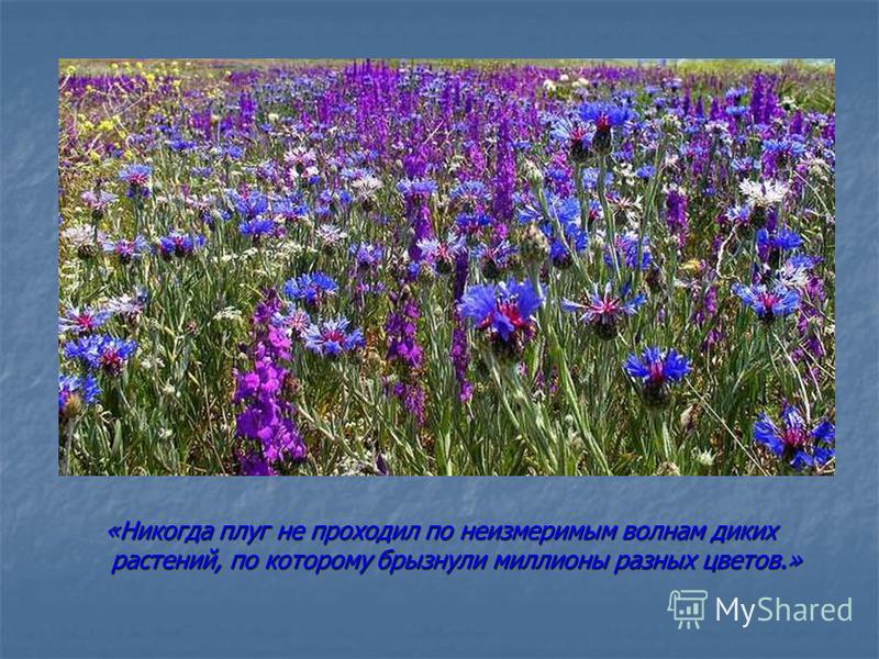 «Никогда плуг не проходил по неизмеримым волнам диких растений, по которому брызнули миллионы разных цветов.»