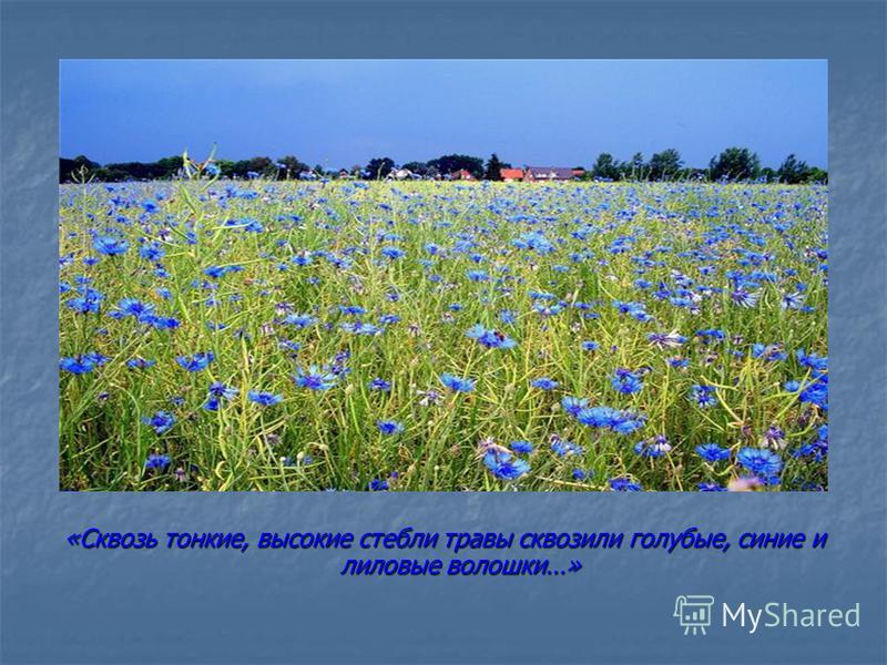 «Сквозь тонкие, высокие стебли травы сквозили голубые, синие и лиловые волошки…»