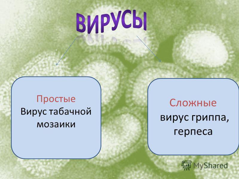Простые Вирус табачной мозаики Сложные вирус гриппа, герпеса