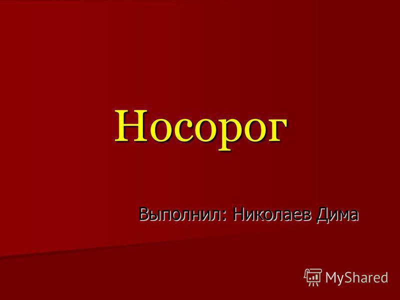 Носорог Выполнил: Николаев Дима