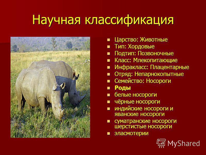 Научная классификация Царство: Животные Царство: Животные Тип: Хордовые Тип: Хордовые Подтип: Позвоночные Подтип: Позвоночные Класс: Млекопитающие Класс: Млекопитающие Инфракласс: Плацентарные Инфракласс: Плацентарные Отряд: Непарнокопытные Отряд: Не