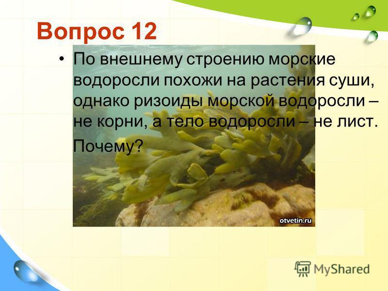 Вопрос 12 По внешнему строению морские водоросли похожи на растения суши, однако ризоиды морской водоросли – не корни, а тело водоросли – не лист. Почему?