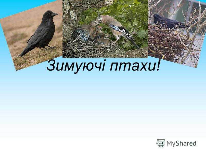 Зимуючі птахи!