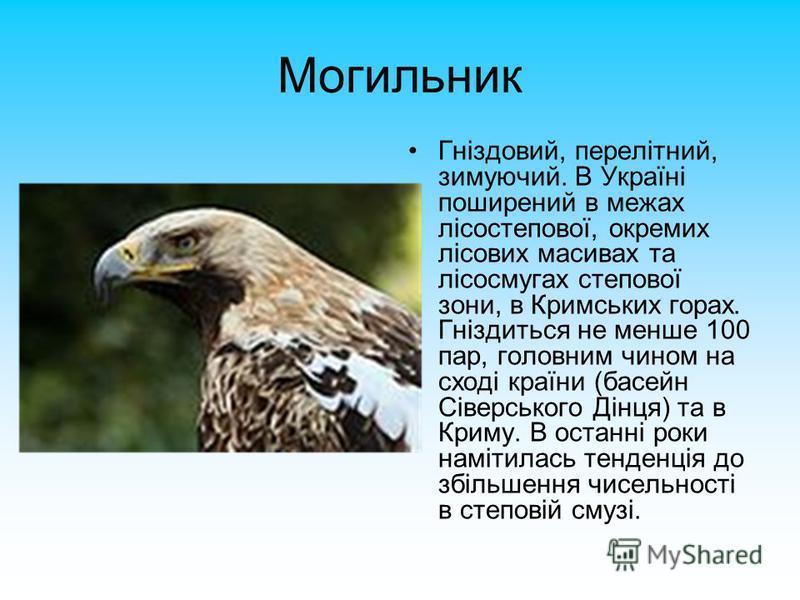 Могильник Гніздовий, перелітний, зимуючий. В Україні поширений в межах лісостепової, окремих лісових масивах та лісосмугах степової зони, в Кримських горах. Гніздиться не менше 100 пар, головним чином на сході країни (басейн Сіверського Дінця) та в К