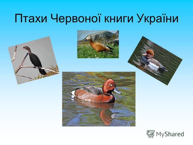 Птахи Червоної книги України