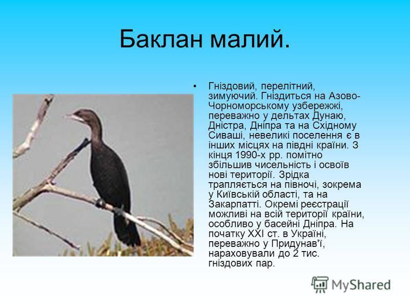 Баклан малий. Гніздовий, перелітний, зимуючий. Гніздиться на Азово- Чорноморському узбережжі, переважно у дельтах Дунаю, Дністра, Дніпра та на Східному Сиваші, невеликі поселення є в інших місцях на півдні країни. З кінця 1990-х рр. помітно збільшив