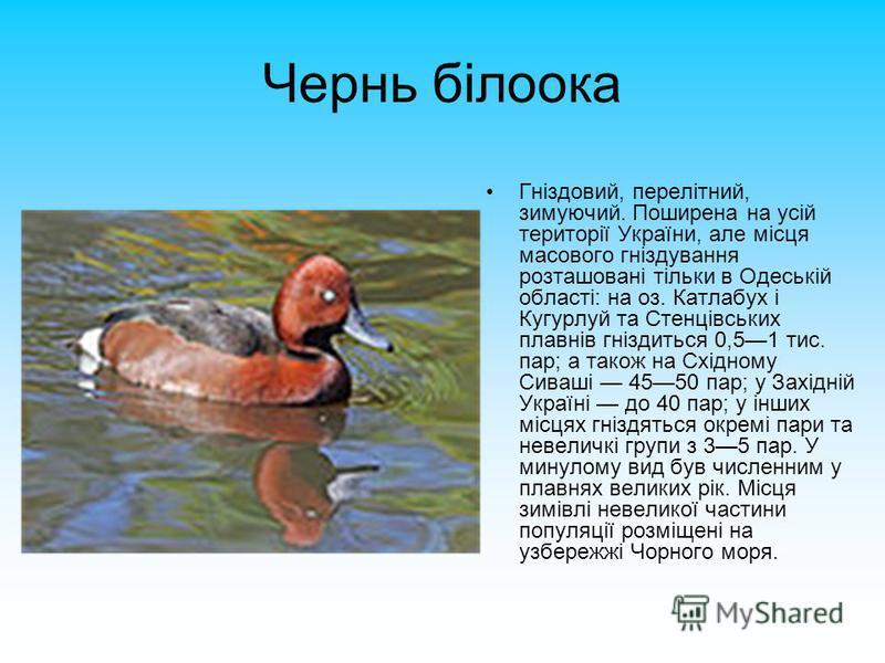 Чернь білоока Гніздовий, перелітний, зимуючий. Поширена на усій території України, але місця масового гніздування розташовані тільки в Одеській області: на оз. Катлабух і Кугурлуй та Стенцівських плавнів гніздиться 0,51 тис. пар; а також на Східному
