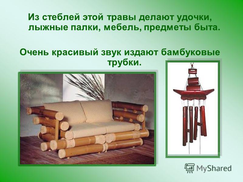 Из стеблей этой травы делают удочки, лыжные палки, мебель, предметы быта. Очень красивый звук издают бамбуковые трубки.