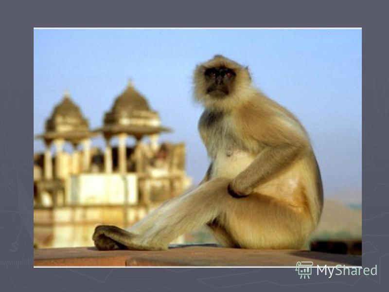 История Мусульманское Королевство Бахмани. Императоры Мугхаль пришли в Пенджаб из Афганистана и в 1525 году победили Султана Дели, возвещая начало Золотого Века Индии. В 17 веке произошло возвышение Империи Маратхов, которая вскоре взяла под контроль