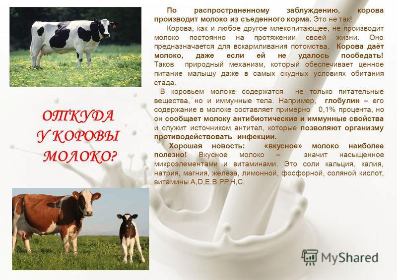ОТКУДА У КОРОВЫ МОЛОКО? По распространенному заблуждению, корова производит молоко из съеденного корма. Это не так! Корова, как и любое другое млекопитающее, не производит молоко постоянно на протяжении своей жизни. Оно предназначается для вскармлива