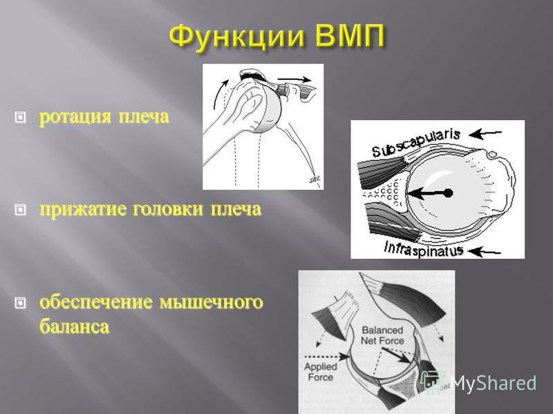 ротация плеча ротация плеча прижатие головки плеча прижатие головки плеча обеспечение мышечного баланса обеспечение мышечного баланса