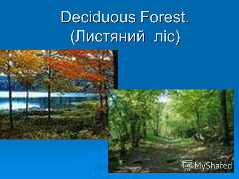 Deciduous Forest. (Листяний ліс) Deciduous Forest. (Листяний ліс)