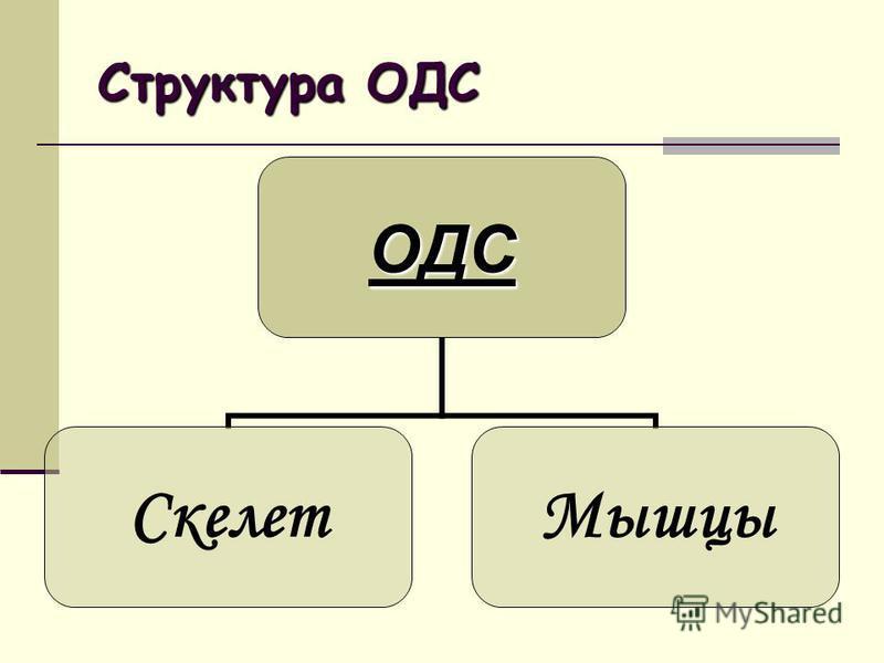 Структура ОДС ОДС Скелет Мышцы