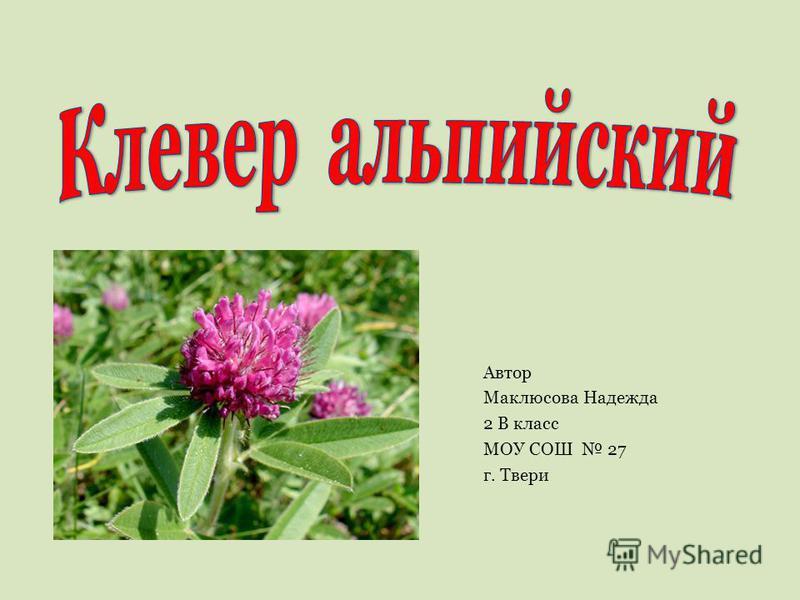Автор Маклюсова Надежда 2 В класс МОУ СОШ 27 г. Твери