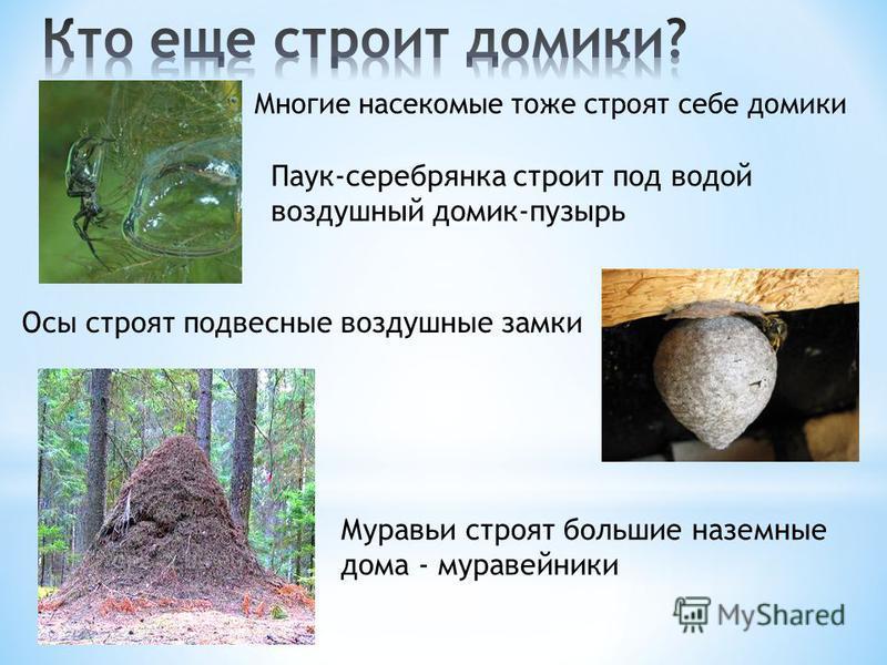 Многие насекомые тоже строят себе домики Паук-серебрянка строит под водой воздушный домик-пузырь Осы строят подвесные воздушные замки Муравьи строят большие наземные дома - муравейники