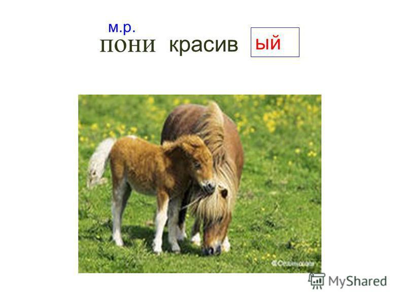 красивый м.р. пони