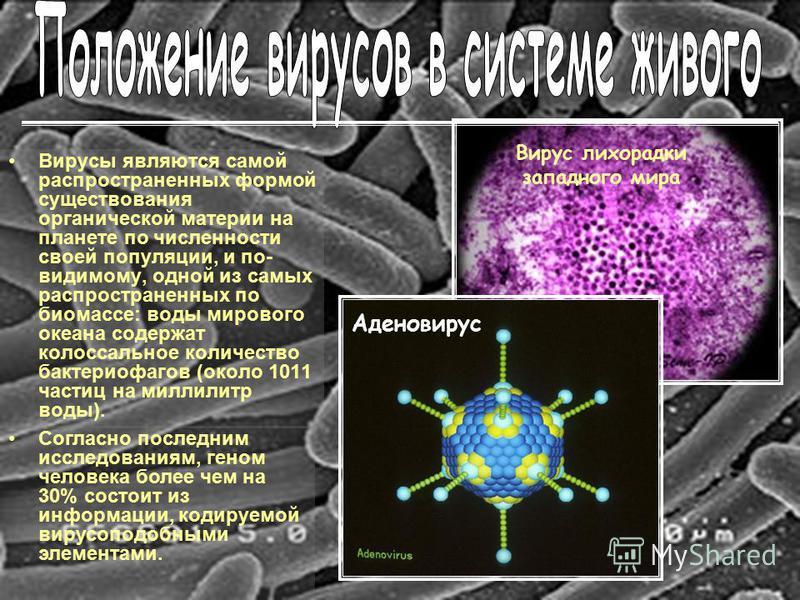 Вирусы являются самой распространенных формой существования органической материи на планете по численности своей популяции, и по- видимому, одной из самых распространенных по биомассе: воды мирового океана содержат колоссальное количество бактериофаг