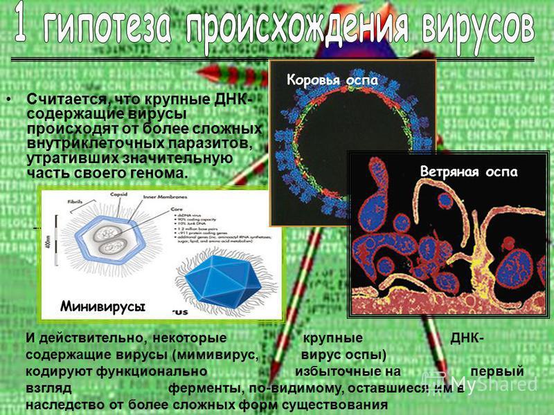 Считается, что крупные ДНК- содержащие вирусы происходят от более сложных внутриклеточных паразитов, утративших значительную часть своего генома. – И действительно, некоторые крупные ДНК- содержащие вирусы (мимивирус, вирус оспы) кодируют функциональ