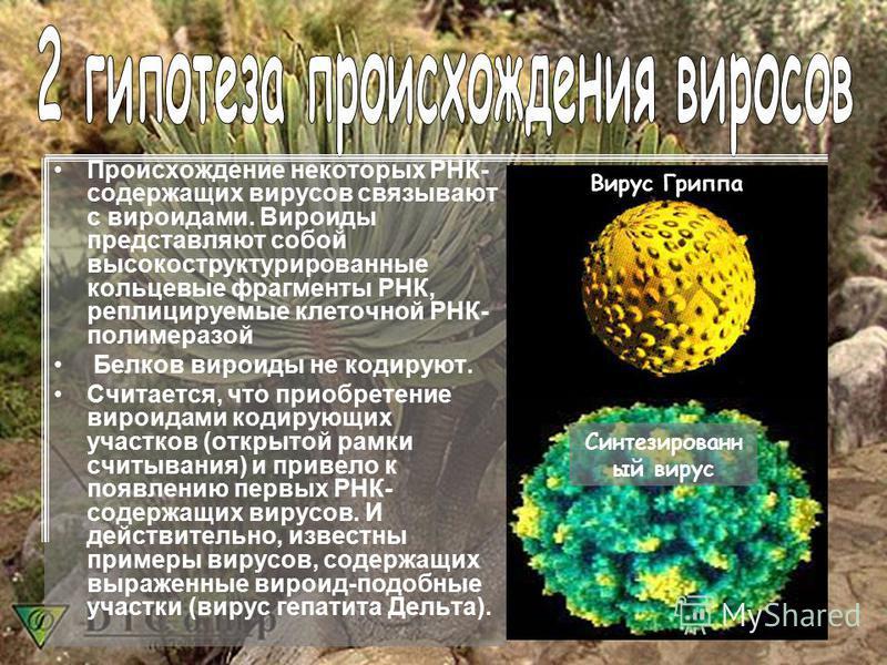 Происхождение некоторых РНК- содержащих вирусов связывают с вироидами. Вироиды представляют собой высокоструктурированные кольцевые фрагменты РНК, реплицируемые клеточной РНК- полимеразой Белков вироиды не кодируют. Считается, что приобретение вироид