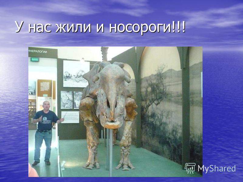 У нас жили и носороги!!!