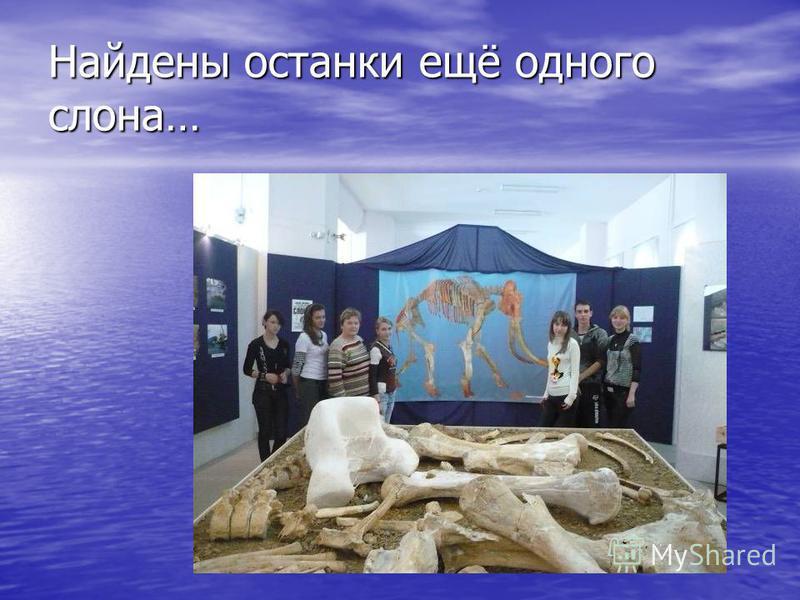 Найдены останки ещё одного слона…