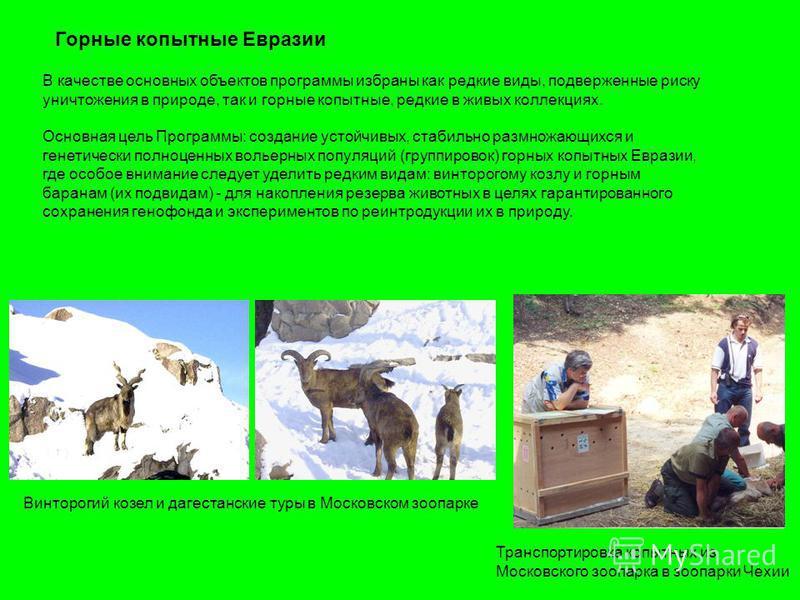 Горные копытные Евразии В качестве основных объектов программы избраны как редкие виды, подверженные риску уничтожения в природе, так и горные копытные, редкие в живых коллекциях. Основная цель Программы: создание устойчивых, стабильно размножающихся