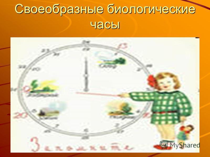 Своеобразные биологические часы