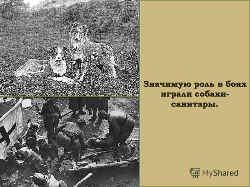 Значимую роль в боях играли собаки- санитары.