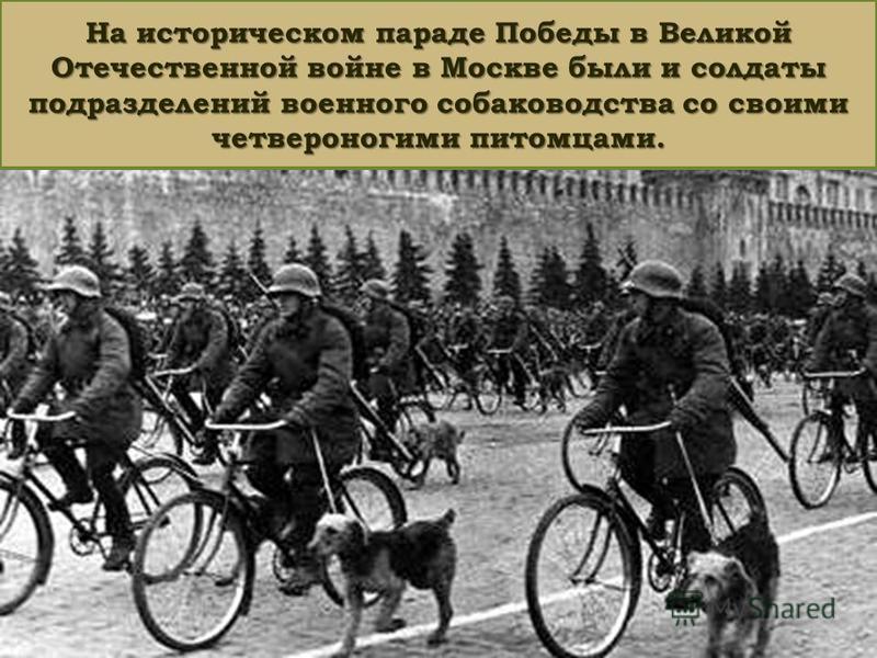 На историческом параде Победы в Великой Отечественной войне в Москве были и солдаты подразделений военного собаководства со своими четвероногими питомцами.