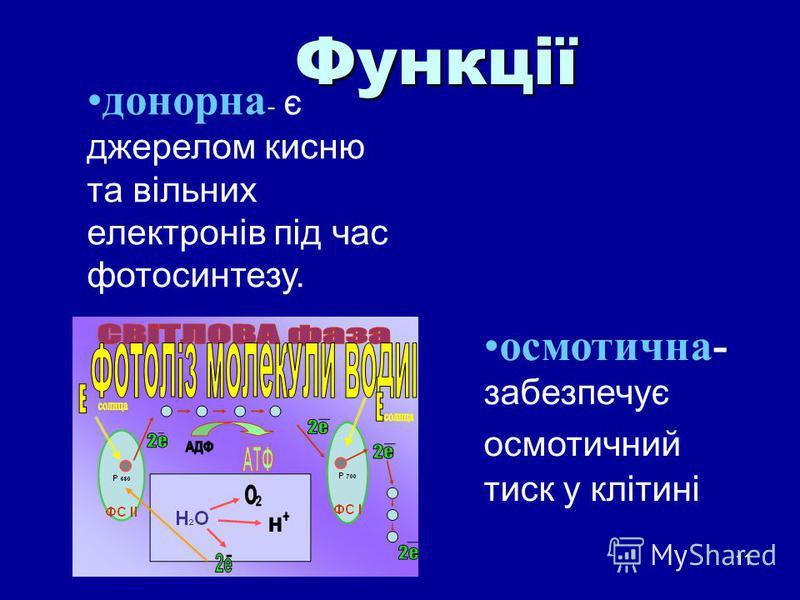 11 донорна - є джерелом кисню та вільних електронів під час фотосинтезу. Функції осмотична- забезпечує осмотичний тиск у клітині