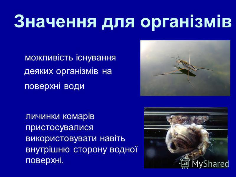15 Значення для організмів можливість існування деяких організмів на поверхні води личинки комарів пристосувалися використовувати навіть внутрішню сторону водної поверхні.
