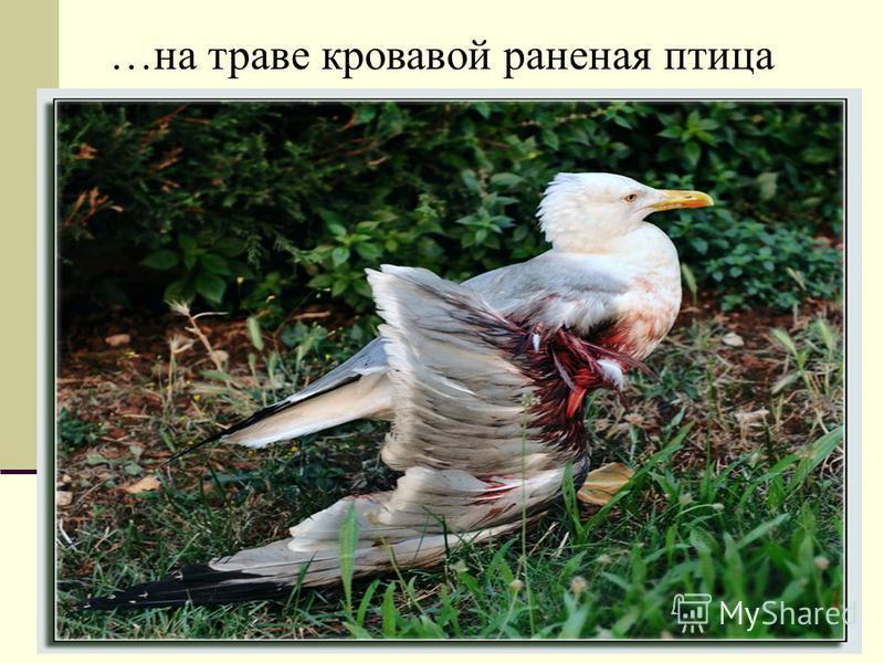 …на траве кровавой раненая птица