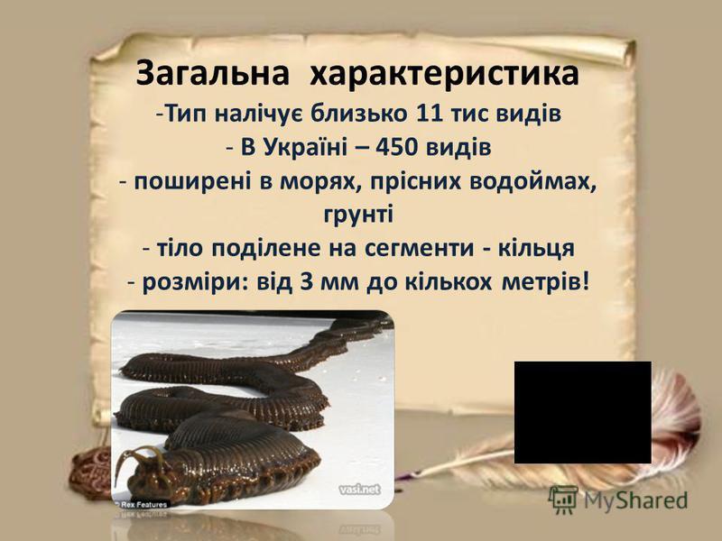 Загальна характеристика -Тип налічує близько 11 тис видів - В Україні – 450 видів - поширені в морях, прісних водоймах, грунті - тіло поділене на сегменти - кільця - розміри: від 3 мм до кількох метрів!