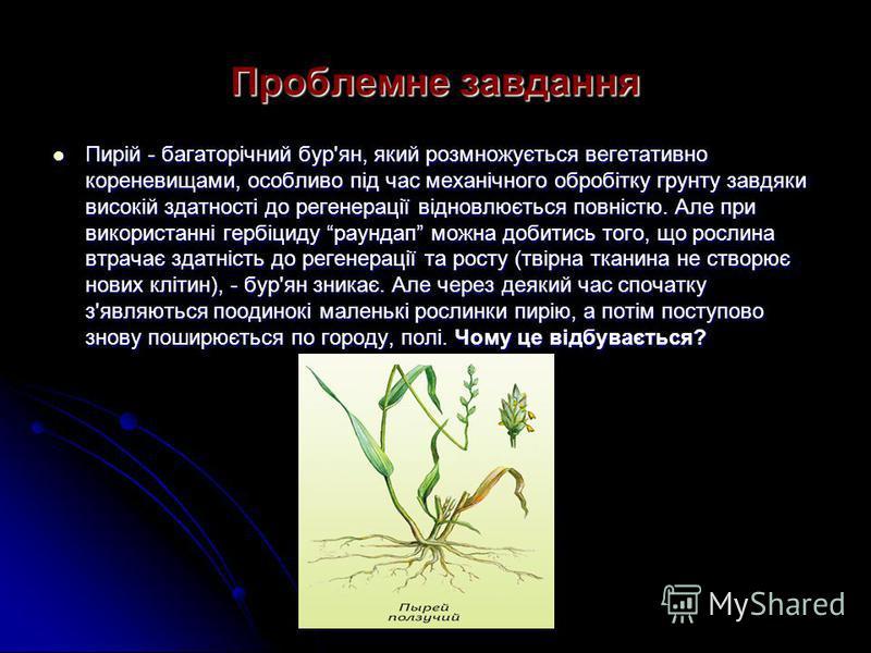 Проблемне завдання Пирій - багаторічний бур'ян, який розмножується вегетативно кореневищами, особливо під час механічного обробітку грунту завдяки високій здатності до регенерації відновлюється повністю. Але при використанні гербіциду раундап можна д