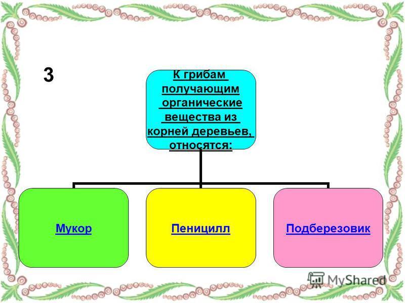 К грибам получающим органические вещества из корней деревьев, относятся: Мукор ПенициллПодберезовик 3