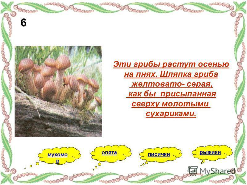 Эти грибы растут осенью на пнях. Шляпка гриба желтовато- серая, как бы присыпанная сверху молотыми сухариками. опята лисички мухомор рыжики 6