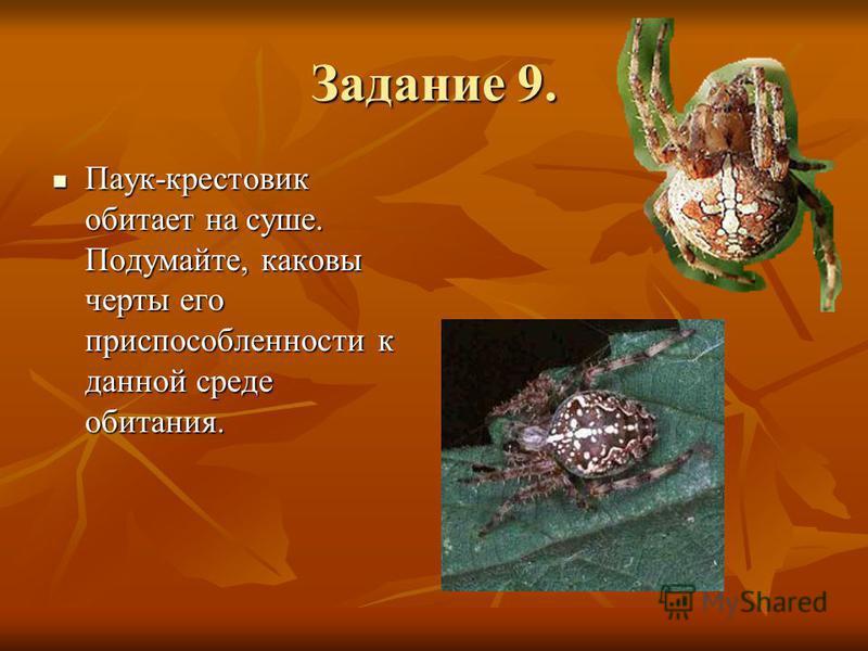 Задание 9. Паук-крестовик обитает на суше. Подумайте, каковы черты его приспособленности к данной среде обитания. Паук-крестовик обитает на суше. Подумайте, каковы черты его приспособленности к данной среде обитания.