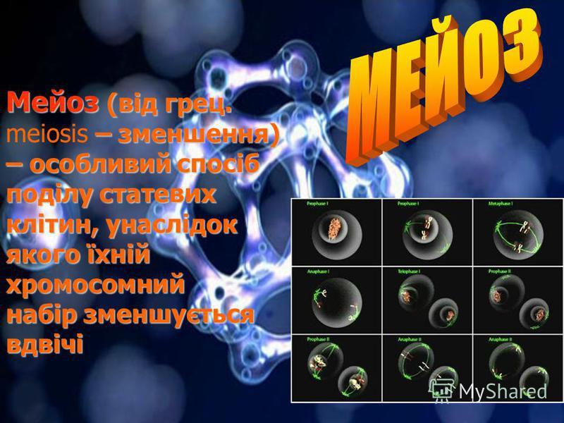 ПЛАН 1. Мейоз, його фази і біологічне значення 2. Мейоз в житєвому циклі організмів