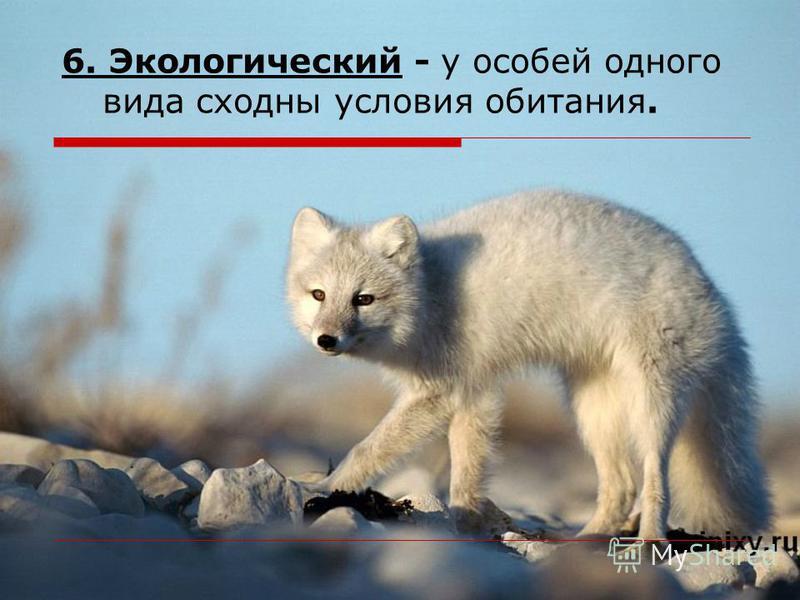 6. Экологический - у особей одного вида сходны условия обитания.