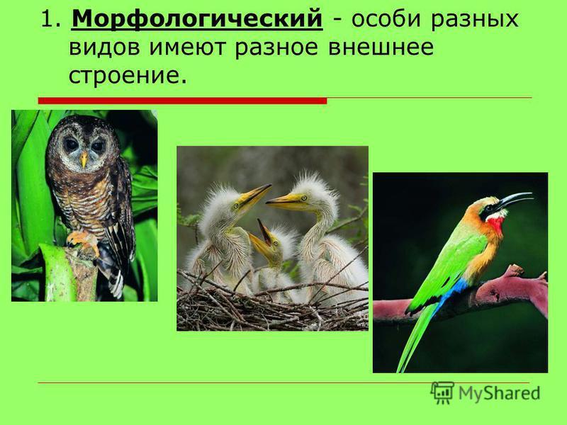 1. Морфологический - особи разных видов имеют разное внешнее строение.