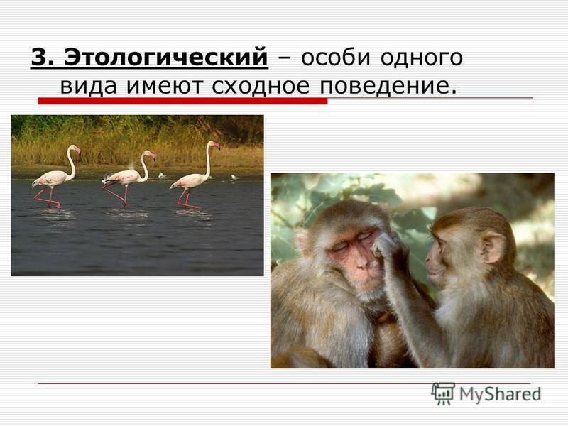 3. Этологический – особи одного вида имеют сходное поведение.
