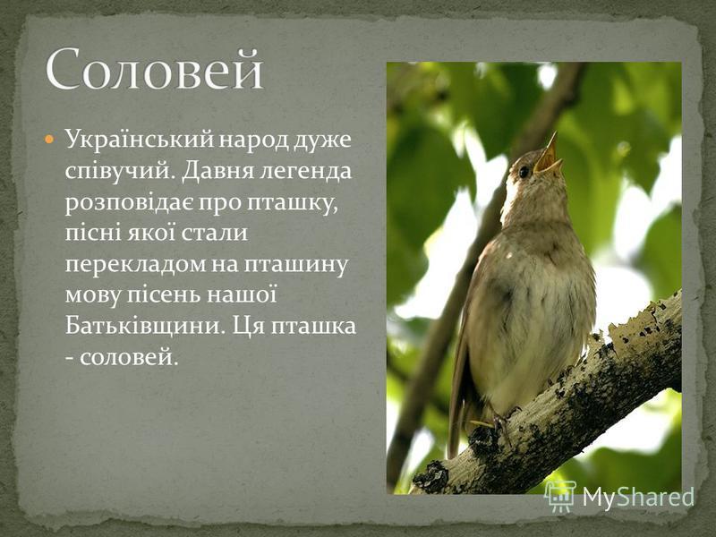 У вирій вона повинна відлетіти раніше, щоб відкрити його для інших птахів. Тому не встигає вона висидіти пташенят і підкидає яйця в чужі гніздечка. У народних піснях її порівнювали з матір'ю, яка побивається за своїми дітьми називали лагідно