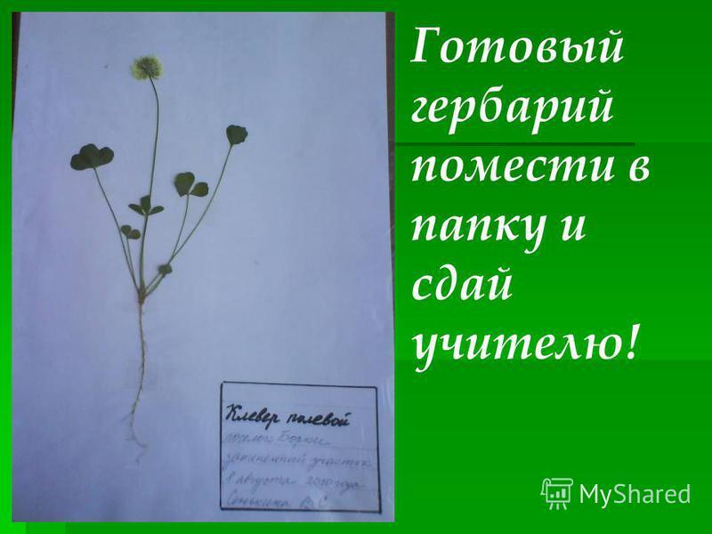 Готовый гербарий помести в папку и сдай учителю!