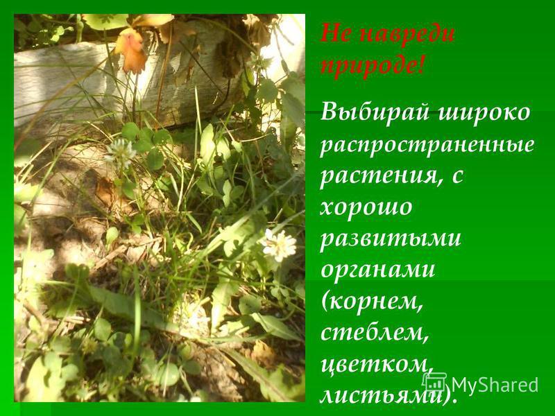 Не навреди природе! Выбирай широко распространенные растения, с хорошо развитыми органами (корнем, стеблем, цветком, листьями).