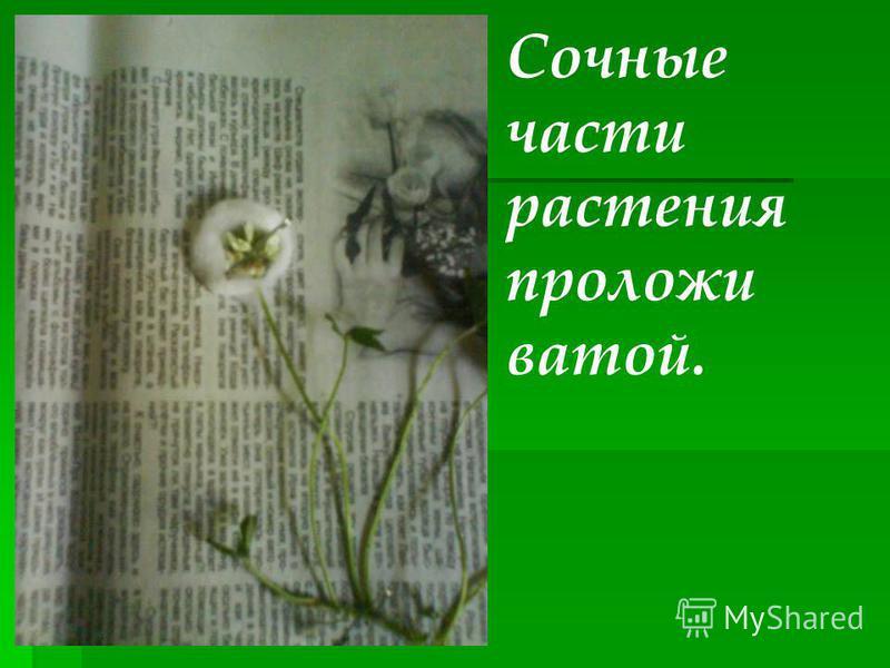 Сочные части растения проложи ватой.