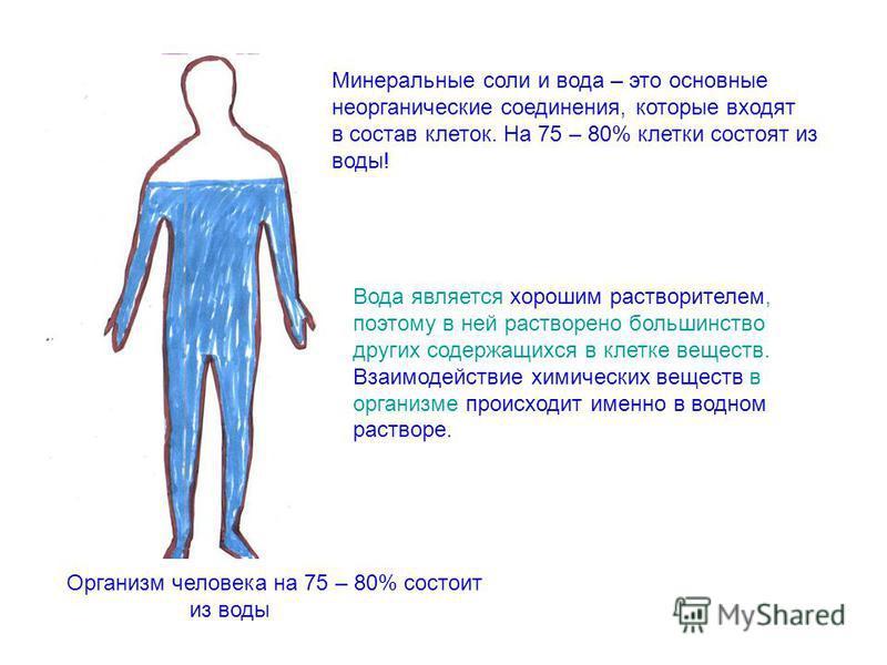 Минерульные соли и вода – это основные неорганические соединения, которые входят в состав клеток. На 75 – 80% клетки состоят из воды! Вода является хорошим растворителем, поэтому в ней растворено большинство других содержащихся в клетке веществ. Взаи