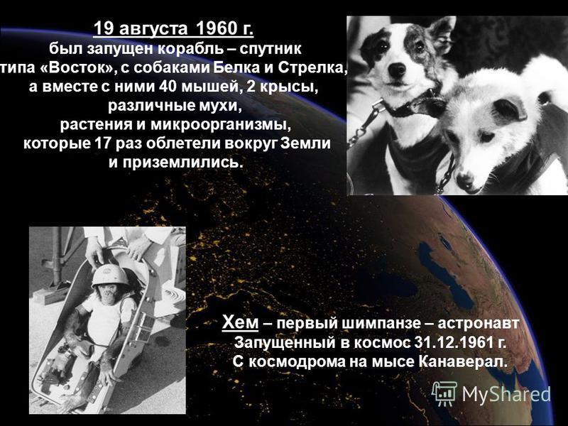 19 августа 1960 г. был запущен корабль – спутник типа «Восток», с собаками Белка и Стрелка, а вместе с ними 40 мышей, 2 крысы, различные мухи, растения и микроорганизмы, которые 17 раз облетели вокруг Земли и приземлились. Хем – первый шимпанзе – аст