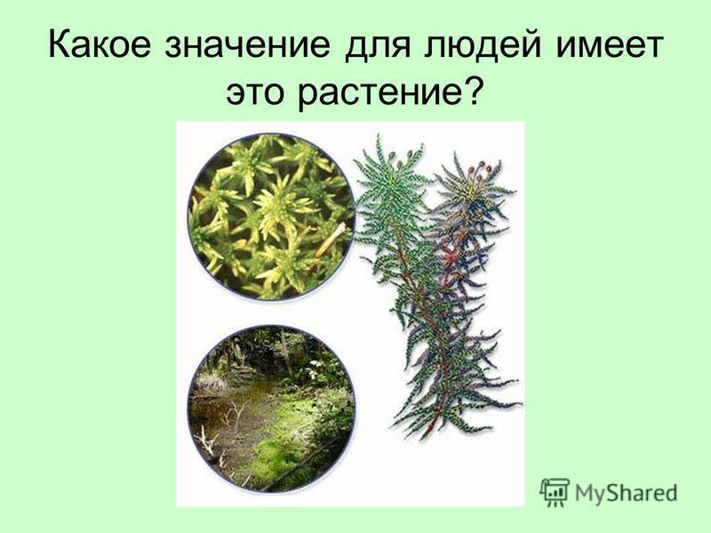 Какое значение для людей имеет это растение?